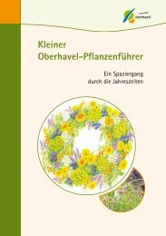 Kleiner Oberhavel-Pflanzenführer - Landkreis Oberhavel