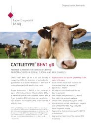 CATTLETYPE BHV1 gB Ab Product Info