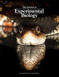 Download PDF - Anatomical Sciences - Stony Brook University